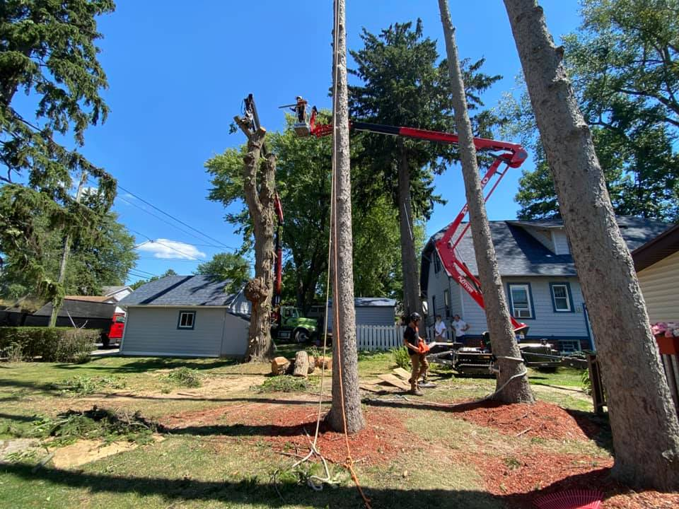 WoodChuck Tree Service, residential tree service, tree service, tree removal service, tree trimming, tree pruning