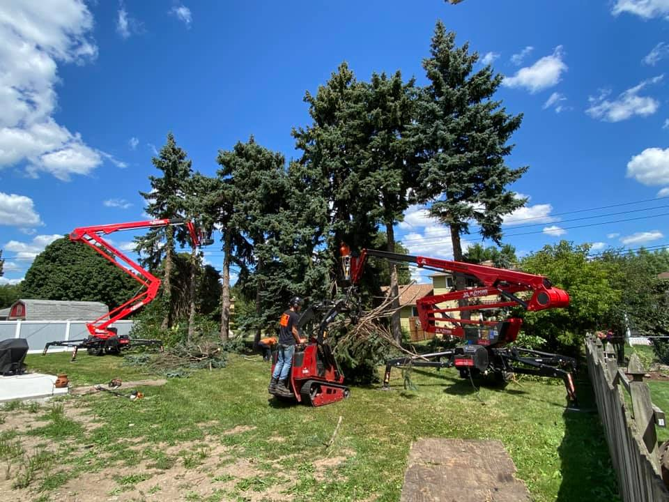 WoodChuck Tree Service, commercial tree service, tree service, tree removal service, tree trimming, tree pruning