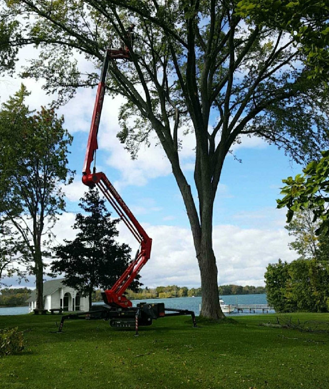 Woodchuck Tree Service, tree service, tree removal service, tree trimming, tree pruning